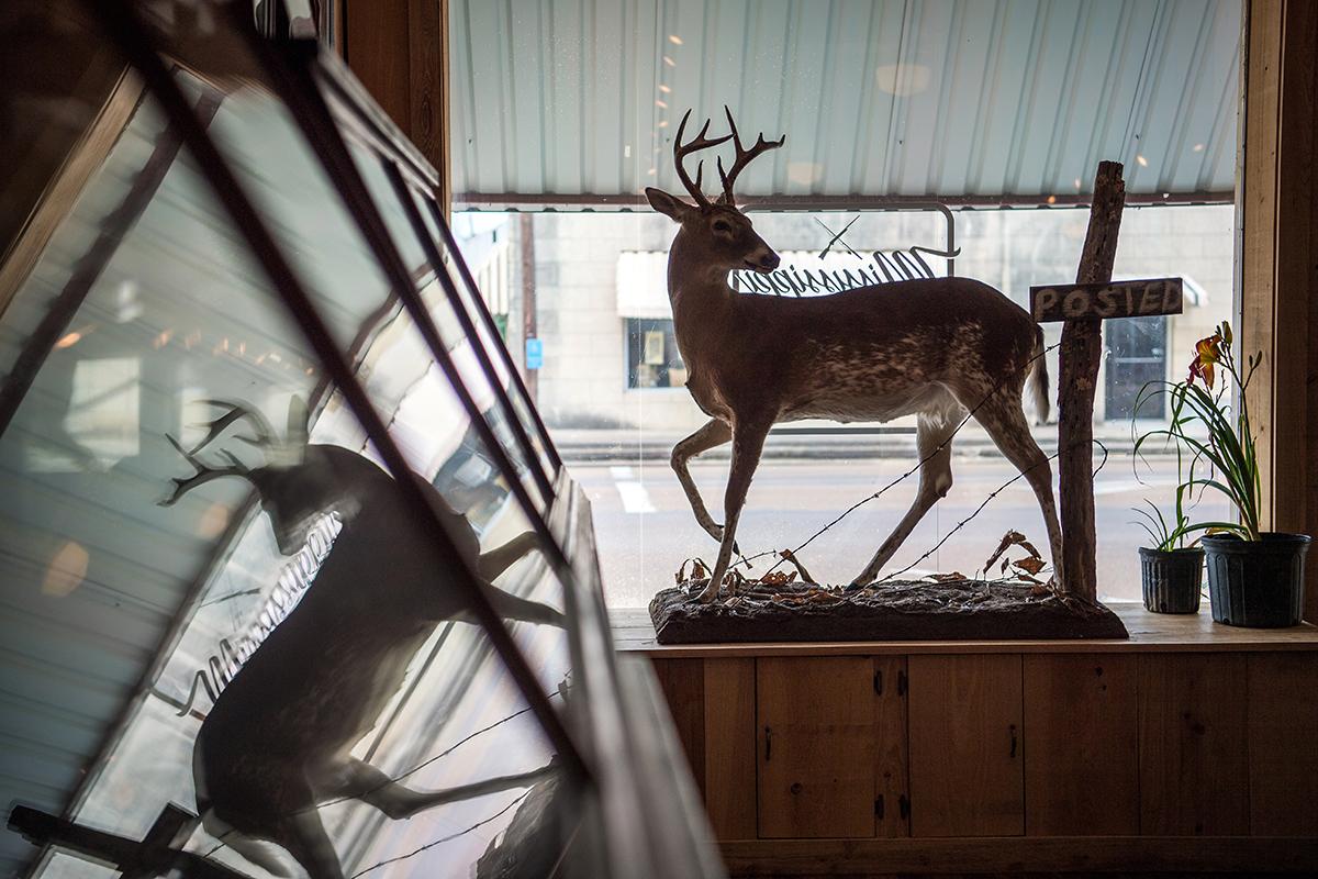 Ms Wildlife Heritage Museum Photo Gallery
